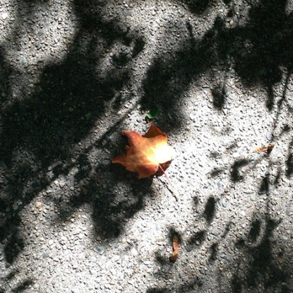 sombra-hojasb-415x415